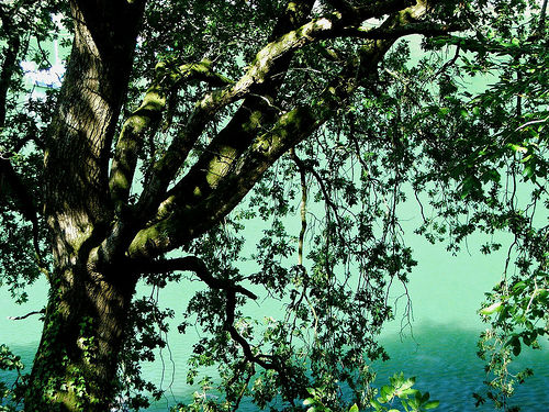 teal tree artist color inspiration