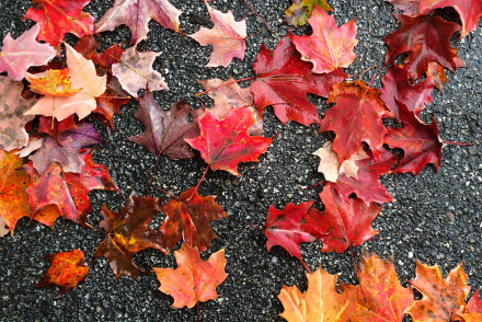 New Hampshire Fall Leaves